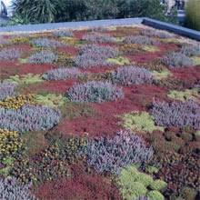 sedum toiture terrasse
