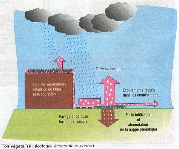 pluie-avec-toiture-vegetalisee