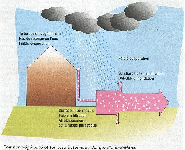 Pluie sans toiture végétalisée