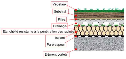 Coupe d'une toiture végétalisée